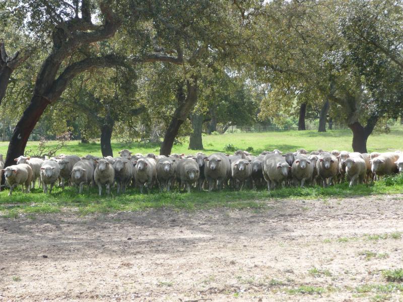 CAP e Ministério em protocolo para acesso das organizações ao licenciamento pecuário e continuação do apoio aos criadores