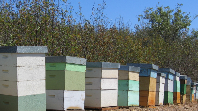 Produção de mel cai quase 80% desde 2018, conclui estudo da FNAP