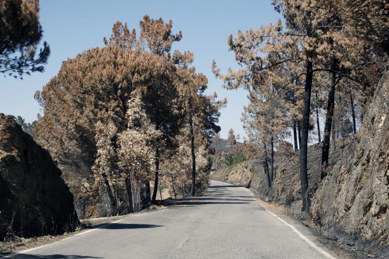 Proprietários responsáveis pela queda de árvores