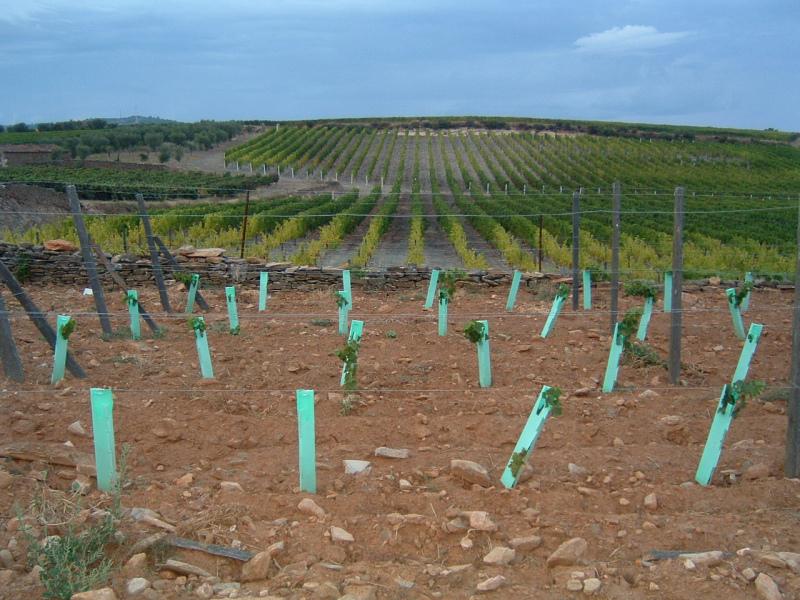 Candidaturas a novas plantações de vinha