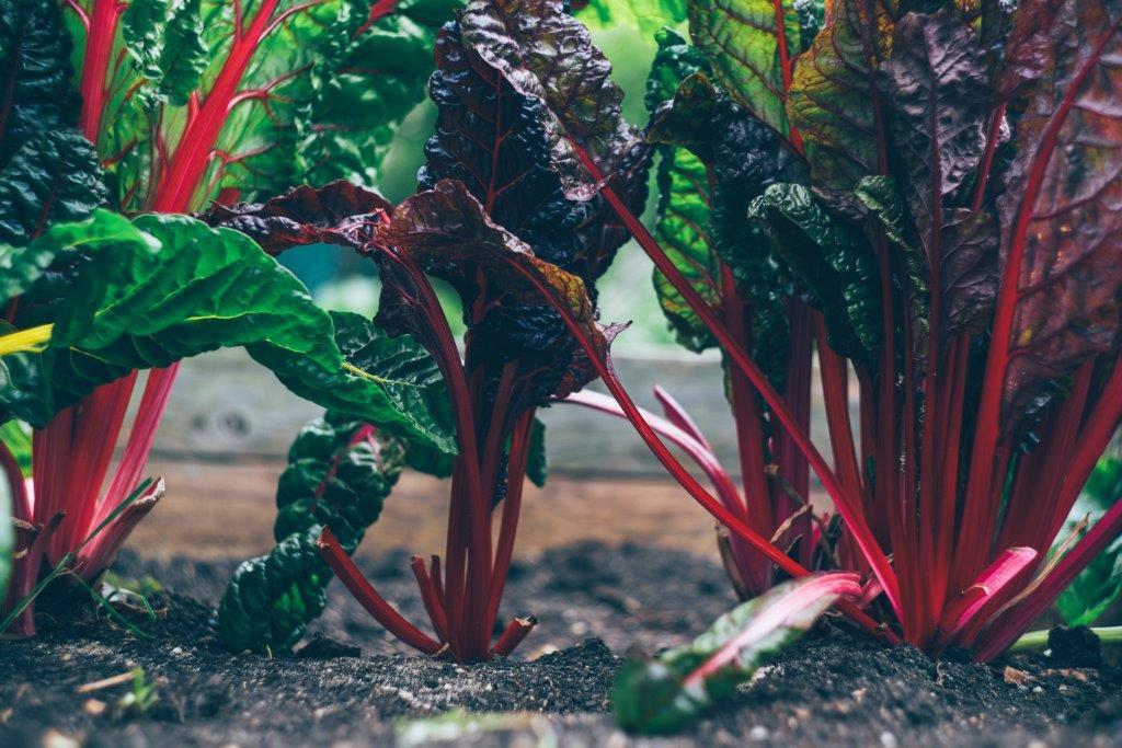 Projeto SAGRI começa em Janeiro a  formar Agricultores Sustentáveis