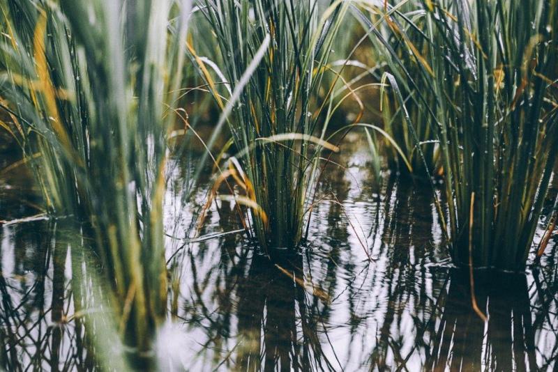 PDR 2020 prorroga até 15 de Maio o prazo para candidaturas ao investimento – Cereais e Vinha