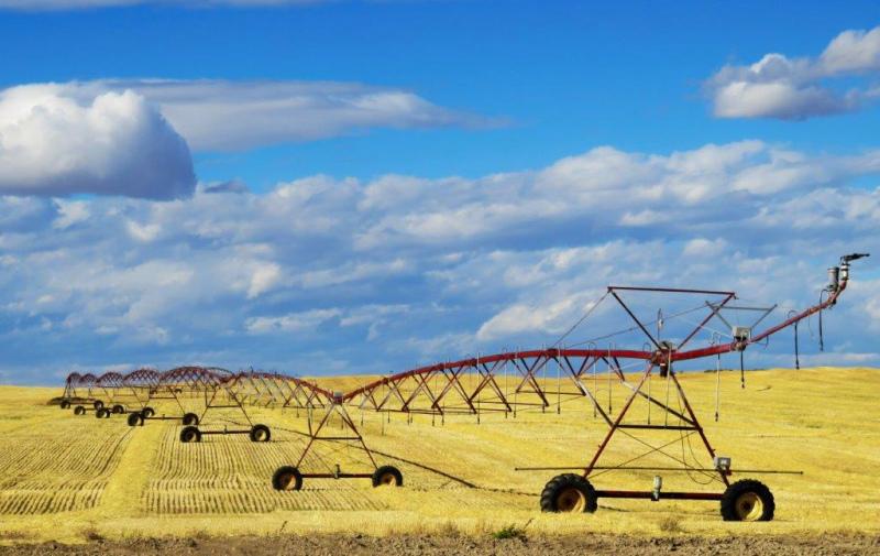 PDR 2020 - candidaturas até 7 de Maio para Investimento em Cerealicultura (incluindo Arroz) e Viticultura