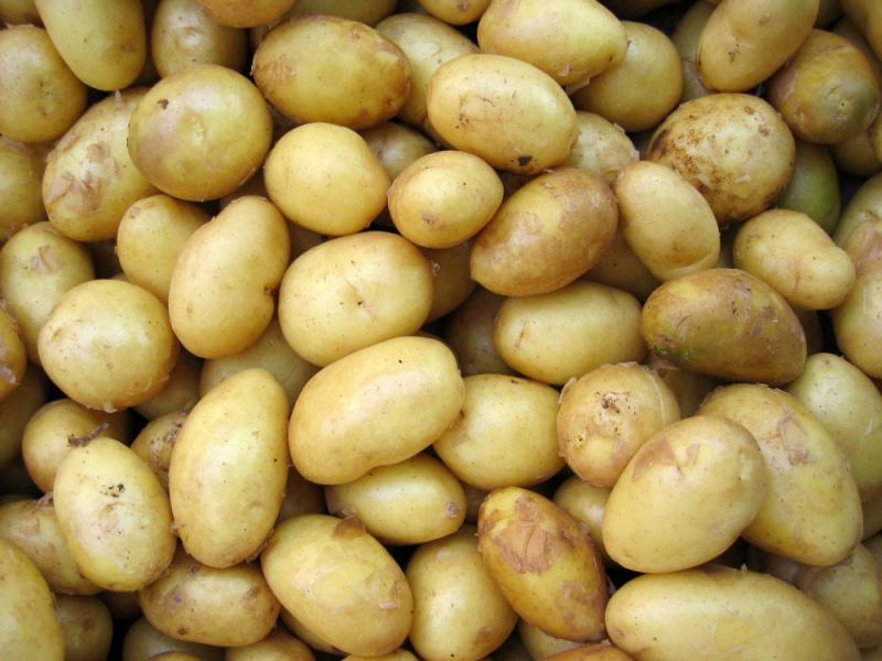 Doença da batata