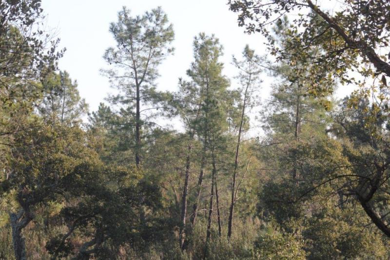 Investimentos Florestais PDR  - Taxa de execução é baixa e Cofinanciamento nacional maioritariamente assegurado pelo Fundo Florestal Permanente