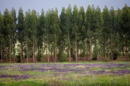 Torres Vedras discute Desenvolvimento Florestal da Região Oeste  no dia 27 de Março, pelas 14h30