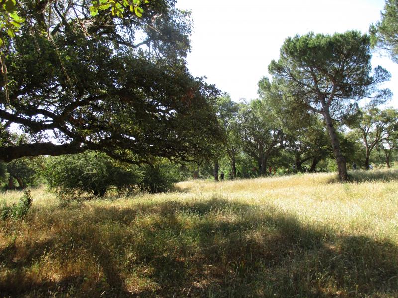 Governo volta a legislar sobre Floresta em Outubro