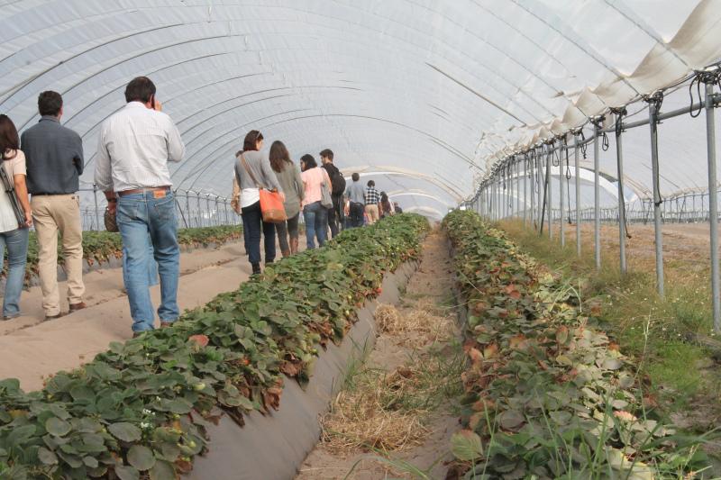 Bruxelas anuncia 1.000 milhões de euros para jovens agricultores