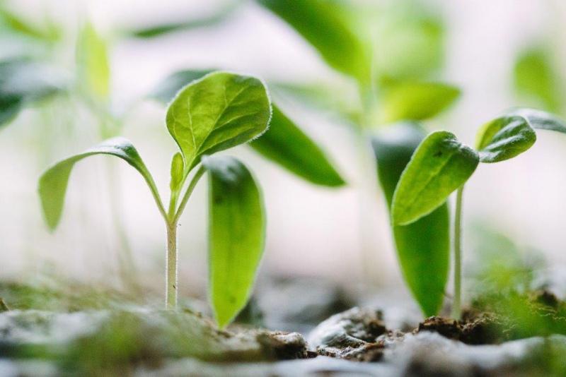 SAGRI - Projeto Europeu de Agricultura Sustentável