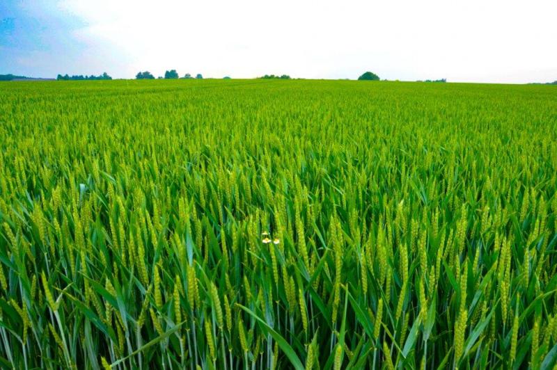Presidente da CAP critica cortes na Politica Agrícola Comum