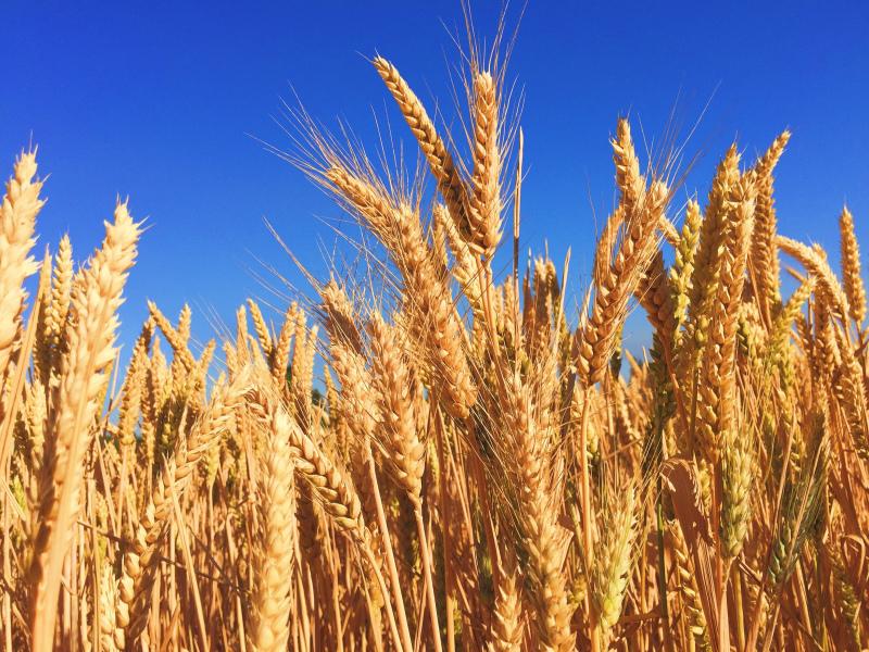 Dia do Agricultor em Elvas  15 de maio conheça a Estratégia para a Produção de Cereais