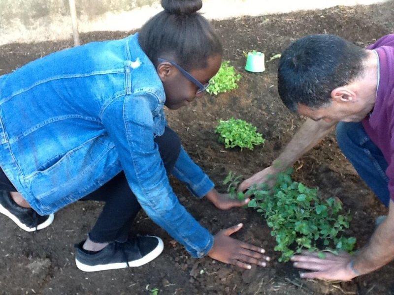CAP e 230 Estabelecimentos de Ensino celebram hoje Dia Nacional da Agricultura na Escola