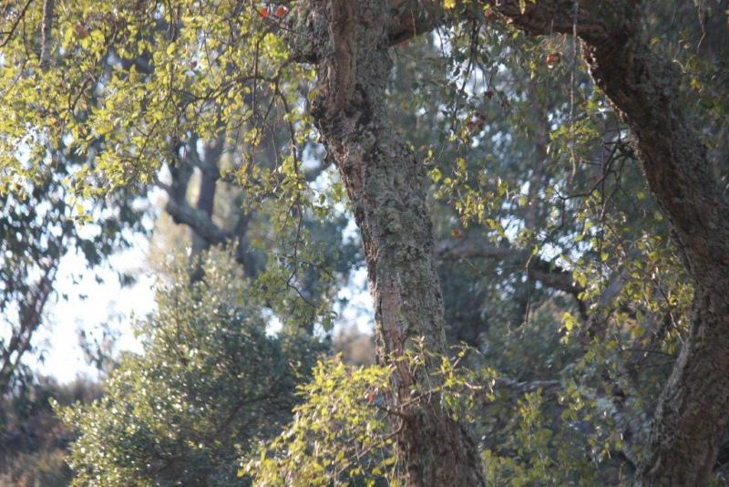 Reforma da Floresta debatida na FNA18
