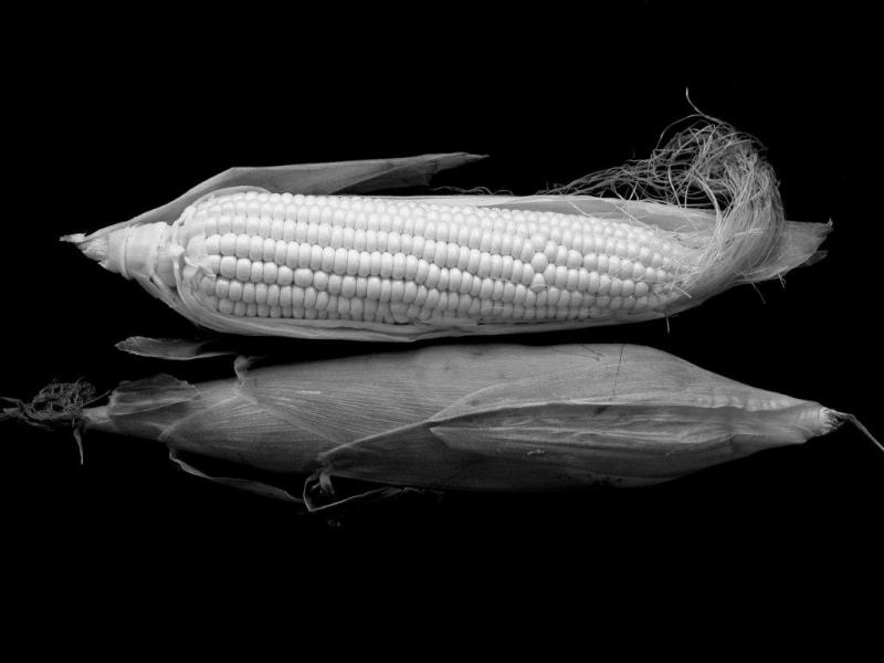 Biotecnologia e OGM's na FNA18