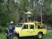 Governo adia coimas sobre a limpeza da floresta para junho