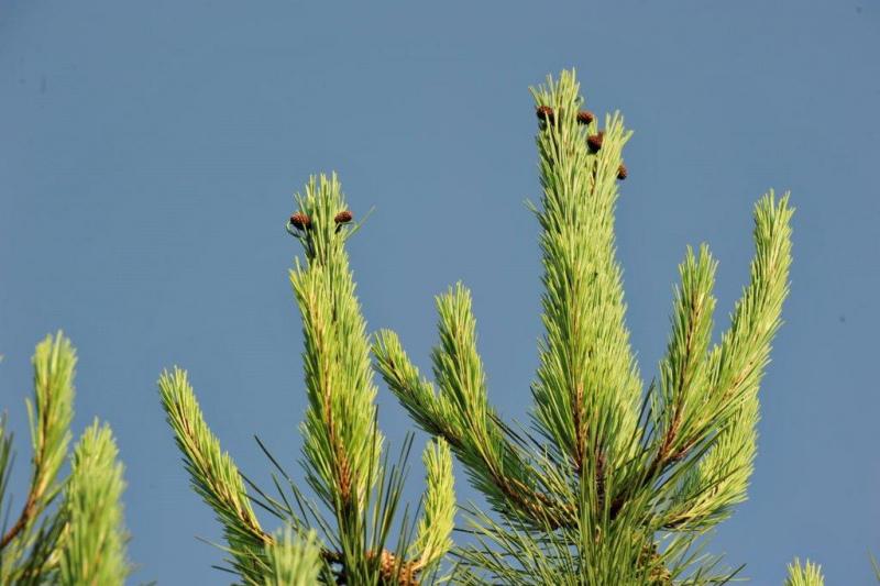 Avaliação do RJAAR confirma  queda das Ações de Arborização e Rearborização