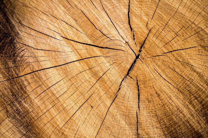 SEMINÁRIO PEFC sobre Certificação Florestal no Alentejo