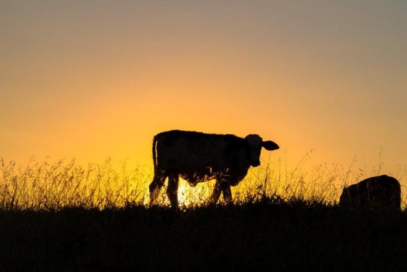 O Seminário: Bem Estar Animal e Produção Pecuária irá decorrer no Auditório da CAP, na sede da Confederação em Lisboa, durante a manhã do dia 22 de outubro.  As questões relacionadas com o Bem-Estar Animal têm vindo a conquistar uma significativa relevância na gestão das explorações pecuárias, tanto pelo fator potenciador da quantidade e qualidade do produto final, como pela exigência de dominar o pacote legislativo nacional e comunitário, a ele associado.  O Programa inclui a apresentação do «Manual de Bem-Estar Animal 2018», uma edição revista e atualizada da edição de 2006, que se tornou uma ferramenta da maior utilidade para produtores e técnicos.      MANUAL DO BEM-ESTAR ANIMAL 2018          PROGRAMA  10h00 – SESSÃO DE ABERTURA  Com a presença do Diretor-geral de Alimentação e Veterinária, Fernando Bernardo  10h15 – MANUAL DE BEM-ESTAR ANIMAL 2018  Apresentação: Maria Jorge Correia – DGAV  A EXPERIÊNCIA DA PRODUÇÃO  Joaquim Capoulas – APORMOR (Regime Extensivo)  Paulo Mota – ANAPO (Regime Intensivo)  Clara Moura Guedes – Monte do Pasto (Exportador)  Miguel Madeira – OPP/ACOS (Veterinário)  Moderador: António Paula Soares – Diretor da CAP  12h00 – IMPORTANCIA DO BEM-ESTAR ANIMAL NAS POLÍTICAS EUROPEIAS DE PRODUÇÃO ANIMAL  Apresentação: Comissão Europeia (a designar)  Eurodeputados: Nuno Melo (CDS), Sofia Ribeiro (PSD), PS (a designar)  Moderador: Luís Mira - Secretário-geral da CAP  13h30 – Sessão de Encerramento  Com a presença do Presidente da CAP, Eduardo Oliveira e Sousa e do Ministro da Agricultura, Florestas e Desenvolvimento Rural (a confirmar)        Nota: O SEMINÁRIO é gratuito, mas exige inscrição prévia dada a limitação da sala.  Inscrição:https://www.eventbrite.pt/e/bilhetes-bem-estar-animal-e-producao-pecuaria-50730185350