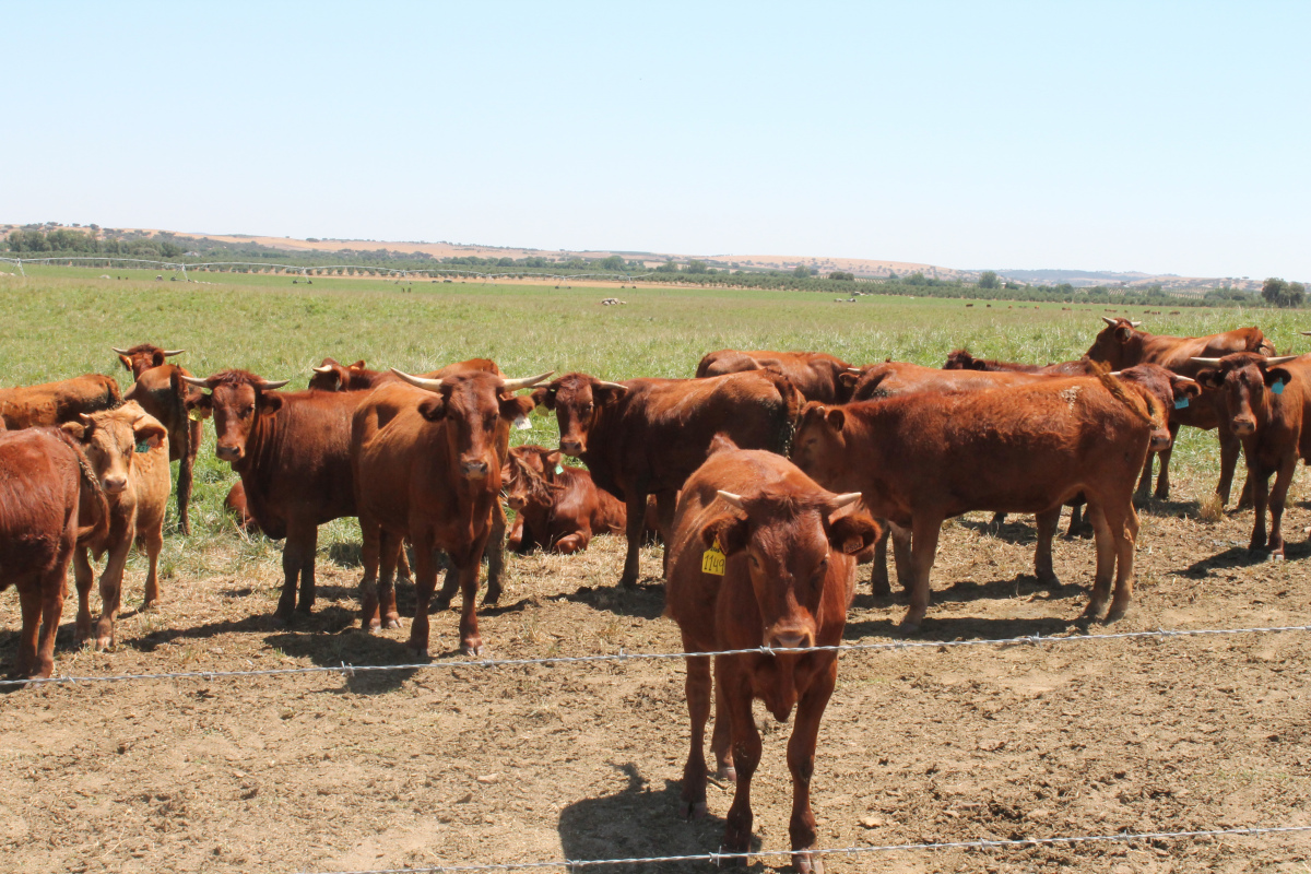 CAP CRITICA MINISTRO DO AMBIENTE por querer reduzir carbono à custa da produção de bovinos