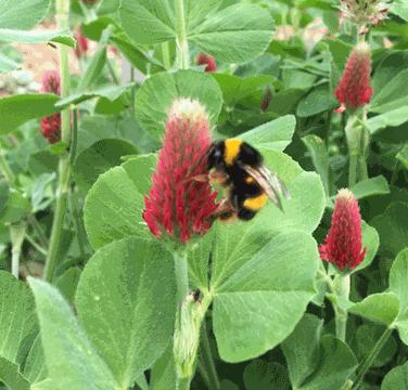 Biodiversidade e Alterações Climáticas